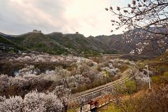 Flower sea and train S2 line, Beijing, China. The high speed train line S2 is a line running through Juyongguan Great Wall and flower forest. When in spring with royalty free stock images