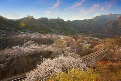 Flower sea and train S2 line, Beijing, China. The high speed train line S2 is a line running through Juyongguan Great Wall and flower forest. When in spring with stock photo