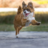 High-spirited Little Guy. Little puppy with high-spirited romp on a concrete slab and he looks cheeky to the left and is with the front legs in the air Stock Photo