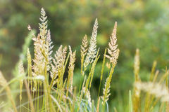 High spring grass Stock Photos