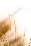 High spring grass in summer on the field Royalty Free Stock Photography