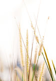 High spring grass in summer on the field Stock Photo