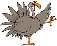 High struttin turkey Stock Photos