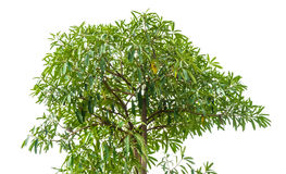 high tall tree Stock Images