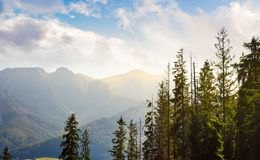 High Tarta mountains behind the trees. Lovely nature scenery in beautiful light Royalty Free Stock Photo