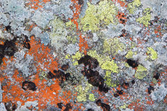 High Tatras - lichen on the rock in - background.  stock photo