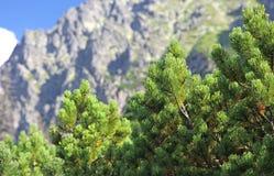 High Tatras mountains, Slovakia Royalty Free Stock Photos