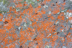 High Tatras - red lichen on the rock. In - background royalty free stock photos