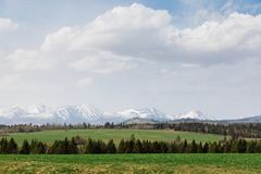 High Tatras during spring. Meadow with tree in foreground royalty free stock images