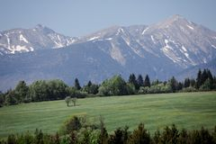 High Tatras during spring - Meadow with tree in foreground - Slovakia stock photo