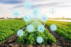 High technologies and innovations in agro-industry. Study quality of soil and crop. Scientific work and development of new methods. And selection of varieties stock photo