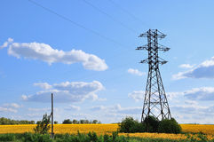 A high-tension line in the field of sunflowers. Royalty Free Stock Images