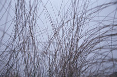 High thin dry grass on a background of purple gray sky Royalty Free Stock Photos