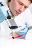 High throughput DNA amplification assay. Setting up PCR reaction with multichannel pipette Royalty Free Stock Photos