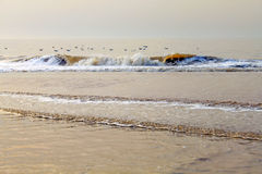 High tide on the beach with golden waves Stock Photo