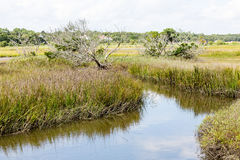 High Tide Through Saltwater Marsh Stock Photography