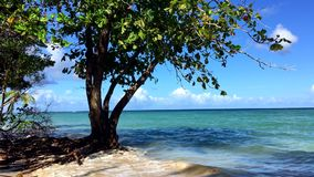 High Tide Tropical Tree in the Waves. High tide waves washing over the roots of a tropical tree as rising sea levels from global warming continue to threaten stock video