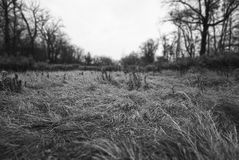 High trampled grass. In a clearing in the woods among the trees, black-and-white landscape Stock Image