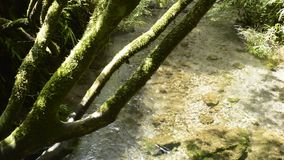 High transparency brook stock footage