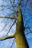 High tree Royalty Free Stock Image
