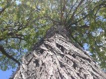 High tree Stock Photo