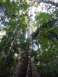 High tree in rain forest Stock Photo