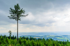 High tree rising above the others in forest Royalty Free Stock Photo
