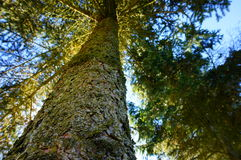 High tree Stock Photography