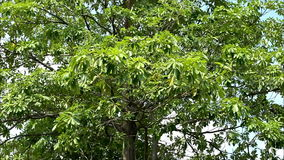 High tree stock footage