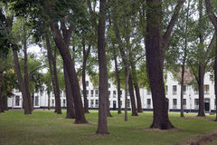 High trees in courtyard of beguinage in flemish city bruges in b Royalty Free Stock Photography