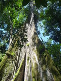 High trees in a deep jungle Stock Photography