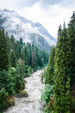 High trees in Dombai. High trees and mountain river Royalty Free Stock Photography