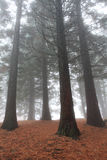 High trees in forest Royalty Free Stock Images