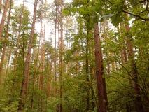 High trees Stock Photo