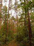 High trees Royalty Free Stock Photo