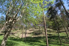High trees and green grass royalty free stock photo