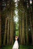High trees and kiss of the married Stock Photo