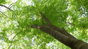 High Up Angled Perspective for Top of the Tree stock video footage