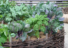 High vegetable garden beds Stock Images
