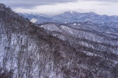 High view of leafless forest and mountains covered with snow. High angle view of leafless forest and mountains covered with snow stock photo