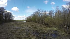 High voltage electricity line and cut trees in forest, time lapse stock video