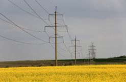 High-voltage line on rape field. High-voltage line on rapeseed field in evening light Royalty Free Stock Photo