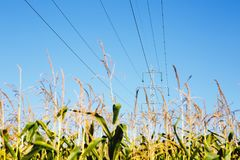 High-voltage lines. Electric line among nature stock photography