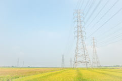 High voltage lines and power pylons with paddy field landscape Royalty Free Stock Photo