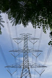 High voltage pole under the leaves. Stock Image