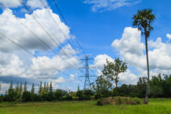 High voltage poles with sugar palm Stock Photo