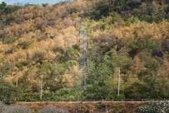 High voltage post in middle of deep rain forest jungle Stock Image