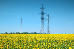 High-voltage power line in the field of sunflowers Royalty Free Stock Photography