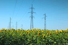 High-voltage power line in the field of sunflowers Royalty Free Stock Images