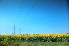 High-voltage power line in the field of sunflowers Royalty Free Stock Image